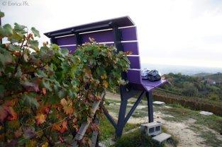 Panchina Viola, Farigliano